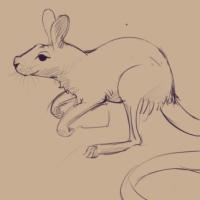 VoronJyl – Kangourou + Rat