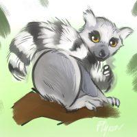 Flyeen – Lémurien à queue rayée
